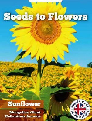 Sunflower - Mongolian Giant -  Helianthus Annuus - 15 Finest Flower Seeds /124F