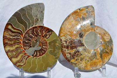 "Cut Split PAIR Ammonite Deep Crystal Cavity 110myo Fossil 205mm XXXL 8.0"" 1500xx"