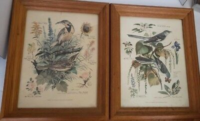 "Set of 2 Wood Framed Vintage Arthur Singer Bird Prints No 4 & No 7 11"" x 14"""