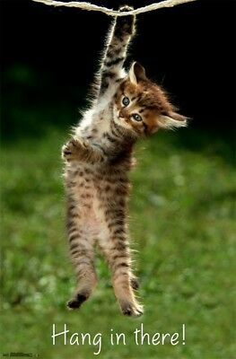 KITTEN - HANG IN THERE - MOTIVATIONAL POSTER - 22x34 CUTE CAT 14200