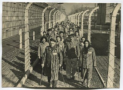 Wwii Large Size Press Photo: Liberated Auschwitz Concentration Camp Survivors