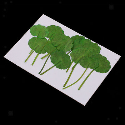 12pcs Real Press Dried Green Leaves For Epoxy Resin Jewelry Making Art Craft
