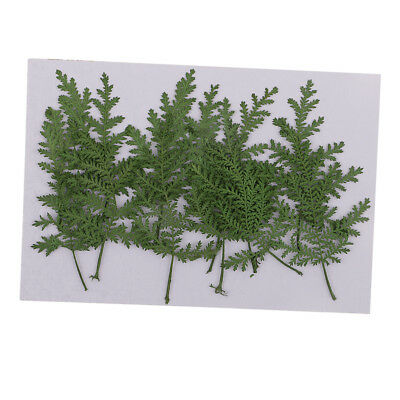 12pcs Pressed Real Dried Leaves Wormwood for DIY Soap Candle Making Decor