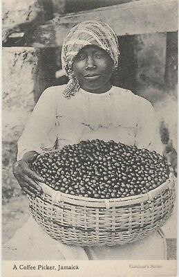 Jamaica -- A Coffee Picker -- Lady with large basket of Coffee Beans -- Postcard