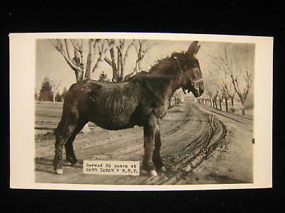 WASHINGTON STATE PENITENTIARY WSP Mule Served 35 Years Hard Labor RPPC Postcard