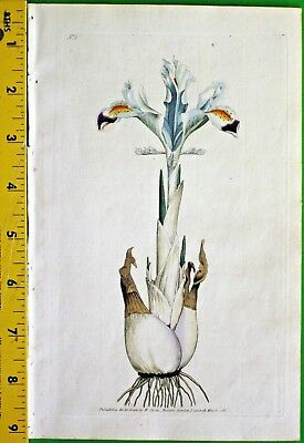 Iris,the very first flower of 1000's to follow, Curtis hand colored Eng.#1,1786