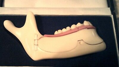 Antique Anatomical Dentist Dental Medical Training Model Of Jaw Bone Tooth Decay