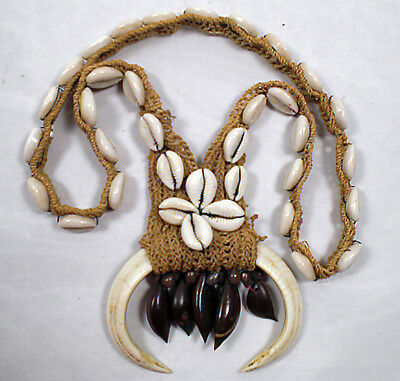A wild boar tusk and cowrie shell necklace bought 1960 in New Guinea