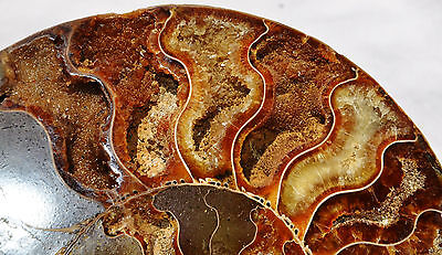 "Fossil Pair Ammonite Great Color Crystal Cavities XXLARGE 6.8"" 175mm n1130xxz"