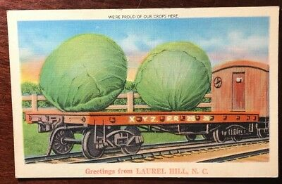 Lettuce Exaggerated Photomontage Antique Photo Postcard Laurel Hill, Nc