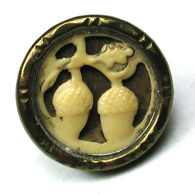 BB Antique Ivoroid Button w/ 2 Acorns Image- 7/16""