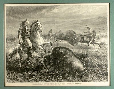 1873 Woodblock Print From Harper's Weekly»'Guardians of the Herd' w/Story<~FINE