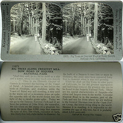 Keystone Stereoview TREES CRESCENT MEADOW ROAD Sequoia NP From 600/1200 Card Set