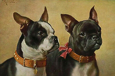 Boston Terrier & French Bulldog Portraits Carl Reichert New  Large Note Cards