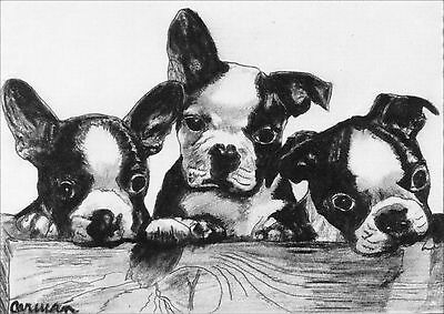 Vintage Boston Terrier Puppy Dogs by Curan Late 1800's ~ New  Large Note Cards