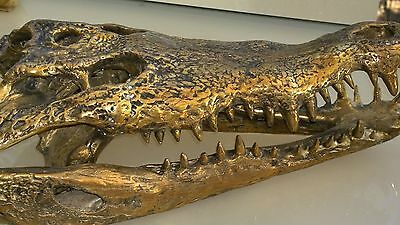 amazing large Crocodile skull solid brass large heavy decoration stunning 50cm B