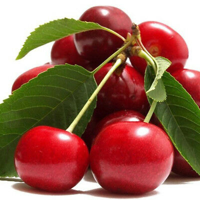Cherry tree seeds peach wedge Jing Tao red cherry fruit trees about 20seeds TB