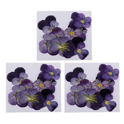 36Pc Real Pressed Real Violet Flower Dried Flowers for Jewelry Making Crafts