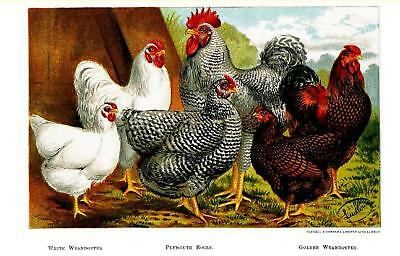 49 Vintage Poultry Books (CD No.2)