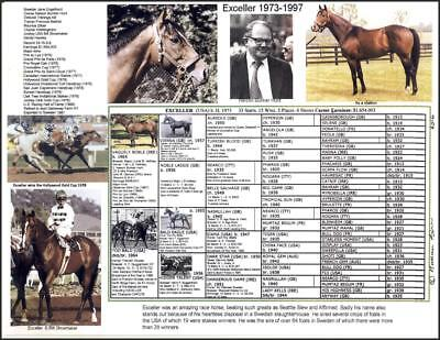 Race Horse EXCELLER picture pedigree photo