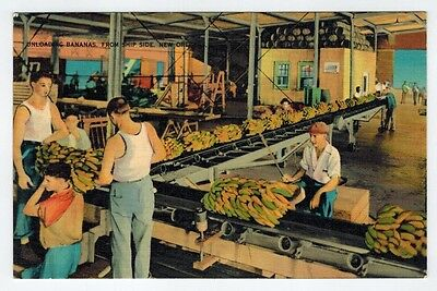 Unloading Bananas from Ship Side, New Orleans, LA