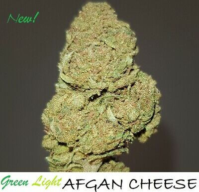 ERBA LEGALE light - AFGAN CHEESE 10g Top Quality INDOOR