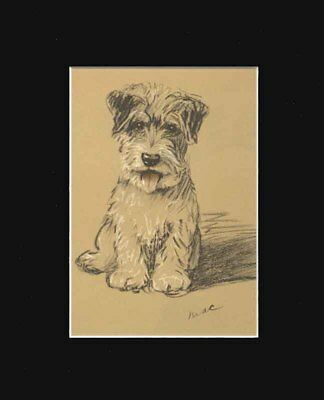 Sealyham Terrier Dog Puppy Setting  Print 1937 by Lucy Dawson 8 X 10 BLACK MAT