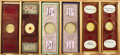 Six Antique Paper Wrapped Microscope Slides No.3