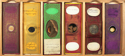 Six Antique Paper Wrapped Microscope Slides No.5