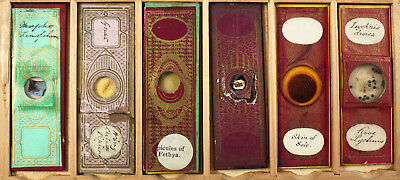 Six Antique Paper Wrapped Microscope Slides No.6
