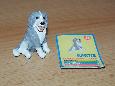 Puppy in my Pocket: Bertie the Bernese Mountain Dog with collectible card 44