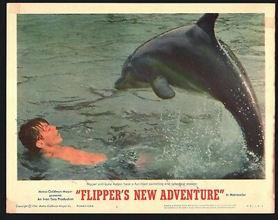 FLIPPERS NEW ADVENTURE (Fine) Lobby Card Set of 8 1964 Movie Poster Art 16000