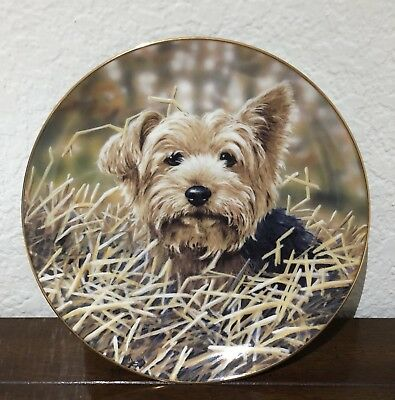 "Danbury Mint Yorkshire Terrier Dog ""After The Harvest"" Collectible Plate W/COA"