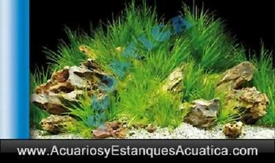 1X0.5M Aquascaping Azul Lamina Doble Acuario Foto Fondo Decoracion Pecera Decor
