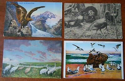 Lot of 4 x Vintage Bird Postcards Eagle, Cranes, Sea Gulls, Turkeys Mixed Lot