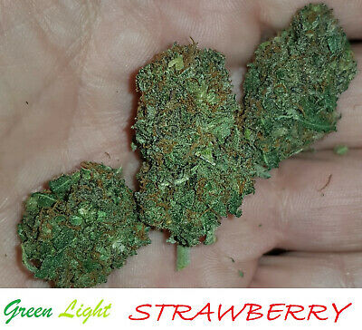 ERBA LEGALE light -  SWEET FRUIT 10g Top Quality INDOOR