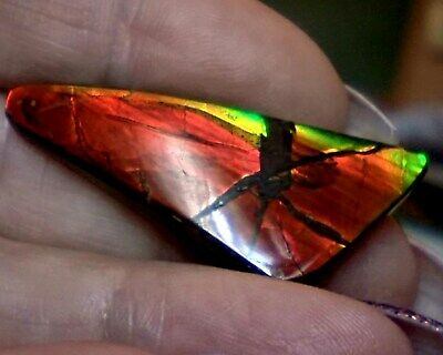 ammonite ammolite STONE 44.2x18mm