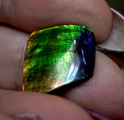 ammonite ammolite STONE 14.7x14.5mm