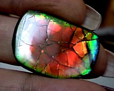 ammonite ammolite STONE 29x21.5mm