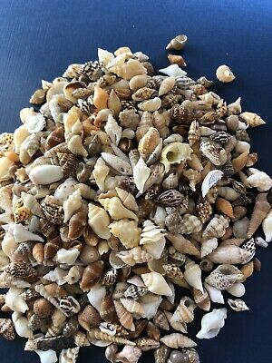 "Seashells 8.35 OZ Craft Supplies Shells Assorted Mix New 1/2"" Rare"