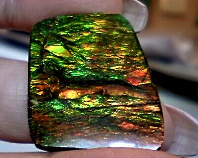 ammonite ammolite STONE 31.6x26mm