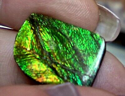 ammonite ammolite STONE 20.5x15.5mm
