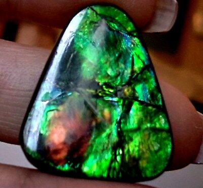 ammonite ammolite STONE 29.5x23.3mm