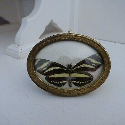 Small antique French oval brass frame with butterfly