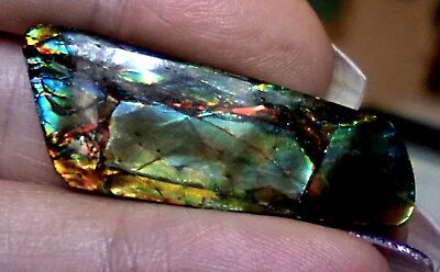 ammonite ammolite STONE 43.2x16mm