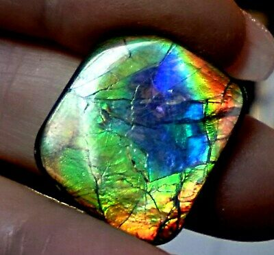 ammonite ammolite STONE 24x22mm