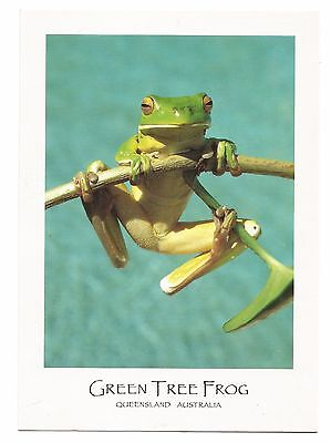 QLD - c2000s POSTCARD - GREEN TREE FROG FOUND IN RAINFORESTS OF NORTH QUEENSLAND