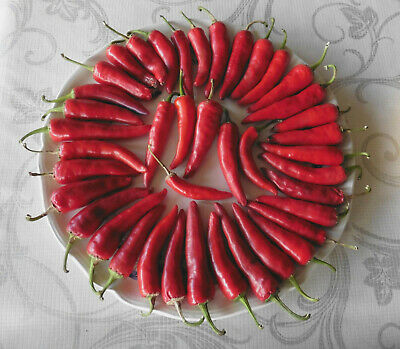 Lot de 50 graines de piment d'Espelette (BIO)