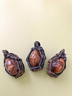 1 Real powerful LP Sompong bia gae shell amulet strong protection wealth luck