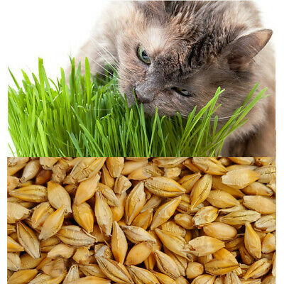 Organic Cat Barley Grass ~ grown in 14 days ~ Pets Love it! ~ BUY 2 GET 2 FREE